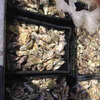 牡蠣いっぱい!