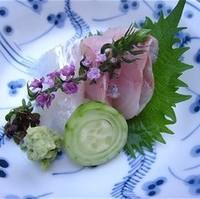 季節の魚盛り合わせ