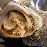 三崎産の姫サザエ、アンチョビ風味グラタン仕立